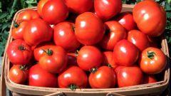 Какие сажать помидоры в средней полосе