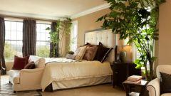 Какие цветы ставить в спальне