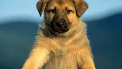 Какой пес лучше всех