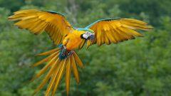 Все о попугаях, как назвать питомца