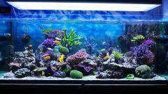 Какой фильтр поставить в аквариуме