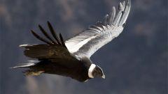 Какие птицы живут дольше всех