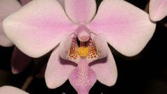 Как выглядит цветонос у орхидеи, что с ним делать после окончания цветения