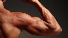 Какие мышцы у человека сильнее всего