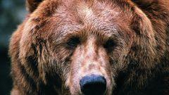 Как в старину называли медведя