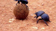 Какие есть жуки