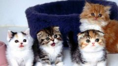 Все о котятах: как ухаживать