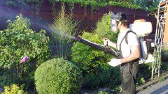 Пестициды: применяем по правилам