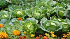 Как защитить растения в саду не химическими методами