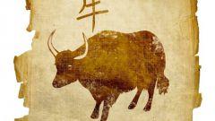 Чего ждать от года Коровы