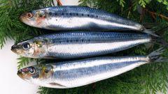 Как узнать, есть ли в рыбе глисты