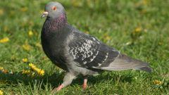 Самые распространенные птицы в России