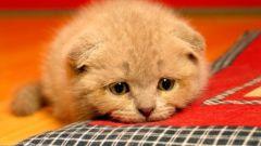 Как вылечить кошку от паразитов
