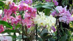 Все про орхидеи: период цветения