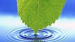 Все о воде как источнике жизни
