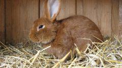 Все про кролиководство как бизнесе