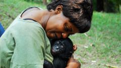 Какие признаки отличают человека от животных