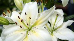 Какие признаки характерны для однодольных растений