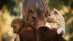 Почему люди любят животных