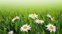 Как заготавливать лекарственные травы
