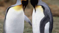 Где обитают пингвины