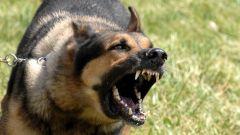 К чему снятся собаки, наносящие укусы