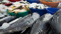 Какую рыбу есть при беременности