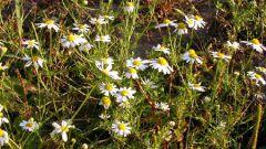 Какие растения относятся к покрытосеменным