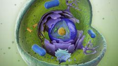Какие химические элементы входят в состав клеток