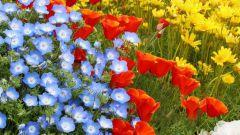 Когда и как сеять семена цветов