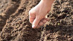 Как сажать семена для открытого грунта
