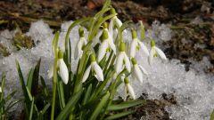 Какие изменения происходят в природе весной