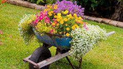 Деревенский колорит: пестрые цветы в старой тачке