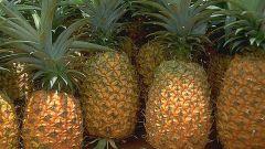 Как вырастить ананас из купленного в магазине плода
