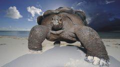 Какое самое долгоживущее животное на земле