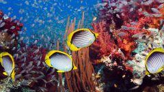 Какое море самое глубокое в мире