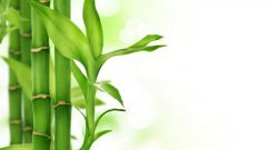Какое растение самое быстрорастущее