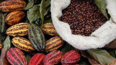 Как использовать масло какао
