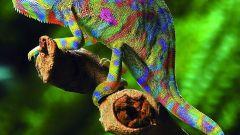 Какие животные меняют цвет