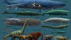 Какое животное самое большое в мире