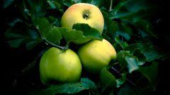 Какие соленые блюда можно приготовить из яблок
