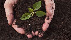 Какие функции выполняет корень растения