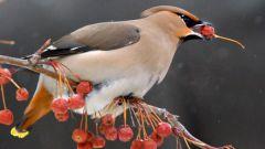 Какие бывают отряды птиц