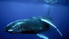 Самые крупные морские животные