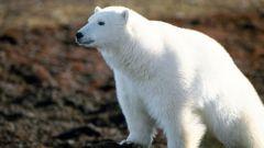 Какие животные и растения есть в Северной Америке