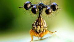 Самые страшные насекомые планеты