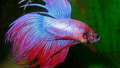 Какие рыбки могут жить без кислорода и фильтра