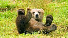 Какие животные водятся в лиственных лесах