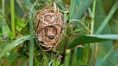 Какое животное устраивает гнезда