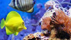Какие аквариумные рыбки самые неприхотливые